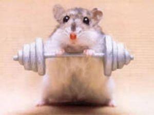 gym-rat